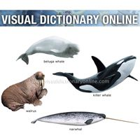 visual-dictionary