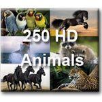 250 фото животных