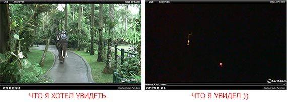 онлайн камеры с сафари парка Бали