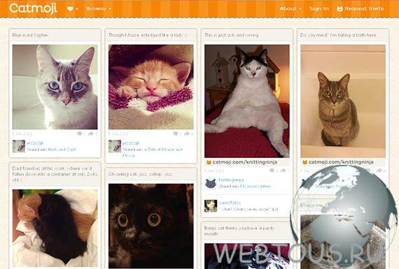 социальная сеть для кошек