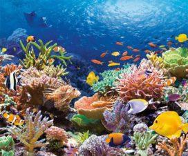 google-ocean-news