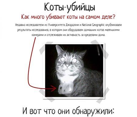 коты-убийцы