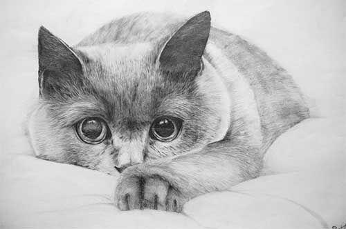 рисунок карандашом из фотографии