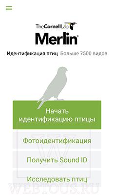 способы определения птиц