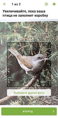 алгоритм идентификации птиц по фотографии